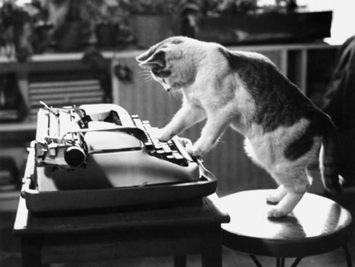 cat typing on typewriter