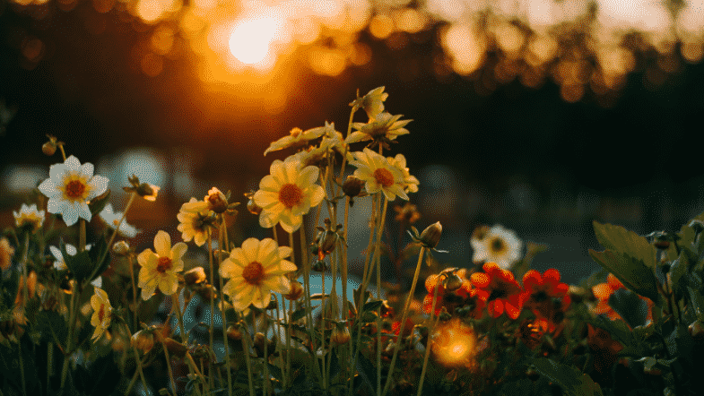 Floriography – The Silent Language of Flowers