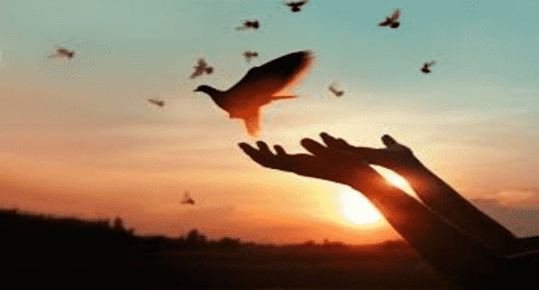 7 Forgiveness Poems that will Change Your Outlook on Life