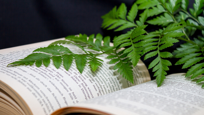 Pick a Houseplant and We'll Pick Your Next Book
